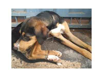 Rescatan a cachorro que fue atado con un alambre de púas