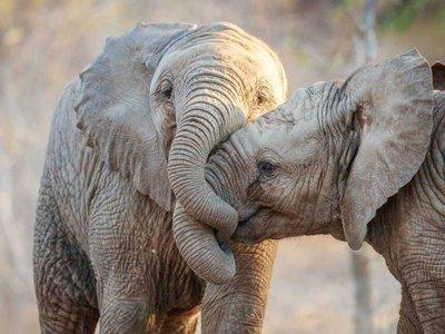 Los mamíferos no evolucionan tan rápido como para evitar su extinción