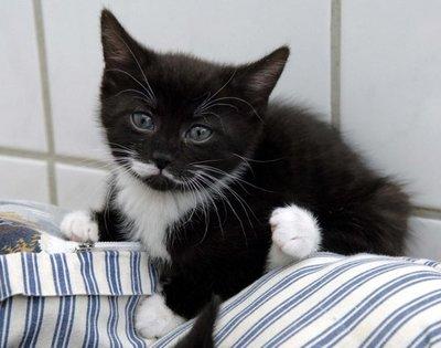 Bolsas de plástico pueden ser una trampa para el gato