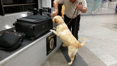 Senad reforzará los controles en aeropuertos para interceptar drogas