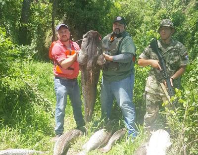 Incautan más de 500 kilos de pescados en el río Paraguay