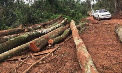 Ordenan detención de 4 brasileños por deforestar 96 hectáreas de propiedad en San Cristóbal