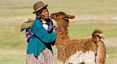Ponen en marcha en Bolivia el mayor matadero de llamas a nivel mundial