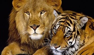 Cayó población de animales salvajes y AL es la región más afectada