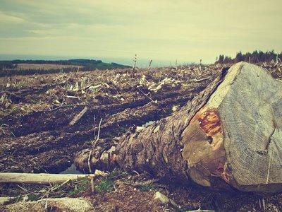 Chaco: Paraguay pierde  334 ha. de área verde por día, según informe