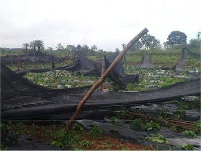 Tormenta destruyó cultivos en Coronel Oviedo