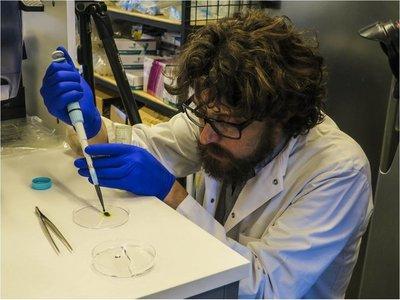 Crean piel fotosintética que podrá regenerar tejido humano