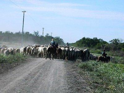 Productores de Alto Paraguay se suman a práctica de ganadería sostenible