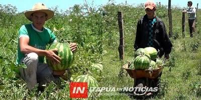 GRAL. ARTIGAS: CON MEDIA HECTÁREA DE TIERRA PRODUCE 5000 FRUTAS DE SANDÍA.