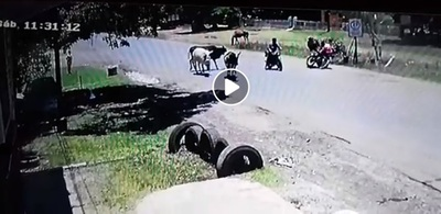 """Filman a vaca """"karateca"""", supuestamente, en Capiatá"""
