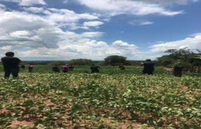 Capitán Bado: encuentran muerto a Heriberto Sánchez Rolón, reportado como secuestrado