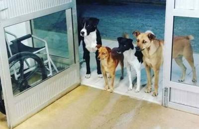 Hombre llegó de urgencia al hospital y sus cuatro perros lo esperaron sin moverse de la puerta