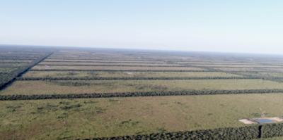 HOY / Nuevo foco de deforestación en el Chaco: un millón de hectáreas desaparecieron en cuatro años