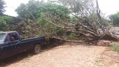 Barrio San Miguel: Árbol caído impide tránsito de personas y de vehículos
