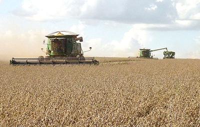 Sojeros anuncian crisis ante merma de 800 mil toneladas en Alto Paraná tras sequía