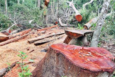 Conforman mesa de trabajo para evaluar deforestación existente en el Chaco