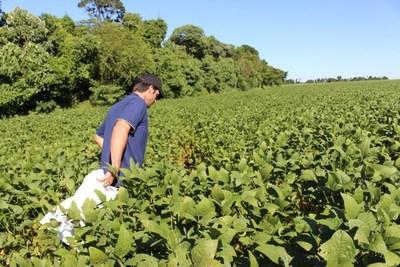 Viceministro de la SET refiere sobre aporte del sector agropecuario