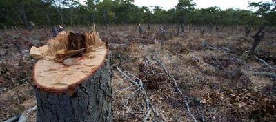 INFONA monitoreará vía satelital zonas boscosas