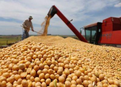 Pérdida de soja rondaría unos US$ 300 millones
