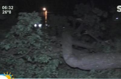 Árbol de Samu'u cayó sobre una casa