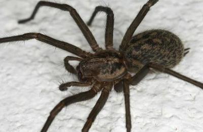 Hombre mata a una araña con un dardo y los usuarios lo acusan de maltrato animal