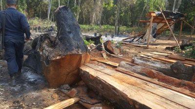 Unas 71 mil ha. boscosas se encuentran en riesgo