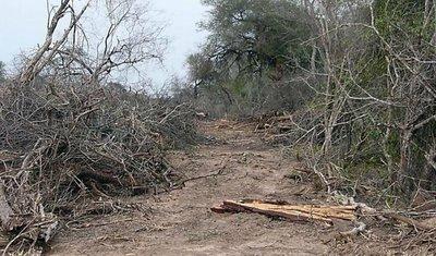 Buscan elevar al 50% la reserva de bosques en el Chaco
