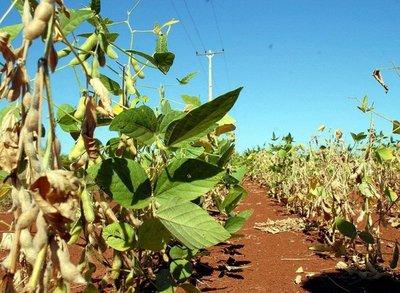 Argentina, gran compradora de soja paraguaya
