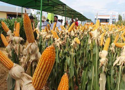 Las exportaciones de maíz se redujeron en un 27% en el 2018