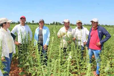 Mecanización de cultivos da excelentes resultados en San Pedro