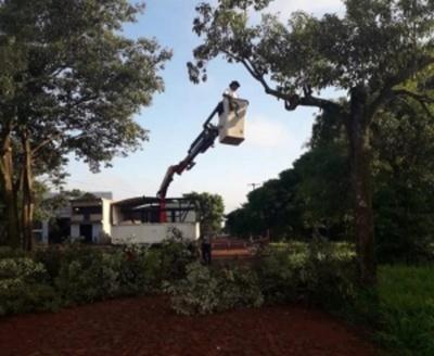 Podan árboles para evitar cortes de energía eléctrica