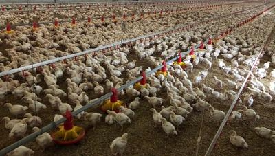 Paraguay busca incrementar exportaciones de carne a Israel