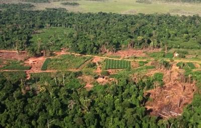 Constatan destrucción de 700 hectáreas en una propiedad en Yhû