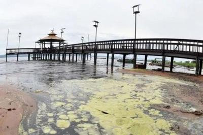 Aumenta cantidad de cianobacterias en el Lago Ypacaraí