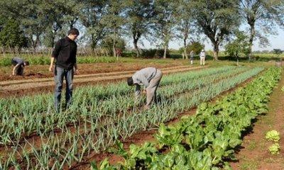 Interesante lluvia en Misiones que beneficia a la producción agrícola y hortícola