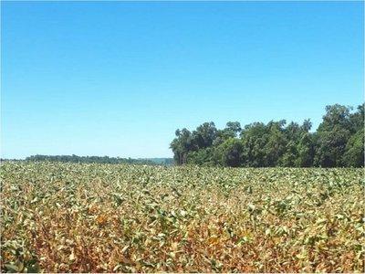 Proyecciones: Sequía puede reducir el crecimiento económico en 2019