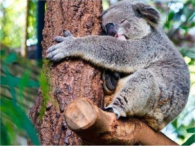 WWF pide a Australia que frene la destrucción de la biodiversidad