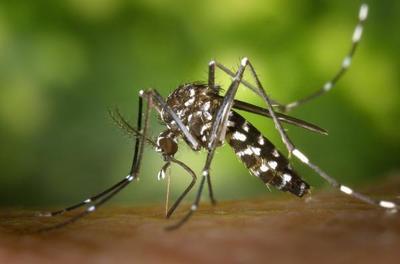 Nivel de infestación larvaria del país es elevado