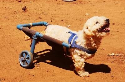 Fabricante de silla de ruedas para canes pide ayuda para refugio
