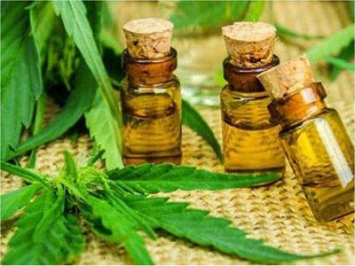 Persisten barreras para uso del cannabis medicinal