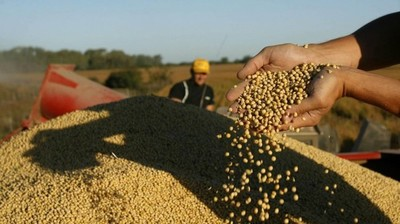 El precio de la soja ajustó a la baja en esta semana