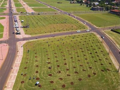 Plantan 500 árboles en Encarnación