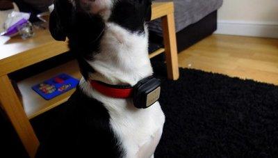 Mascotas, sector mimado por tecnología móvil