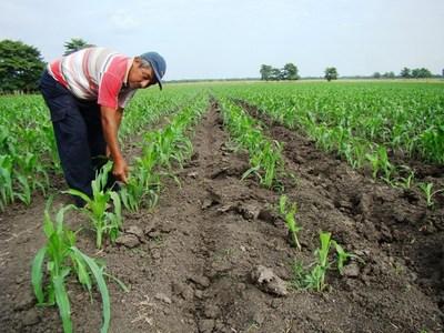 Asisten a productores para satisfacer demanda del mercado local