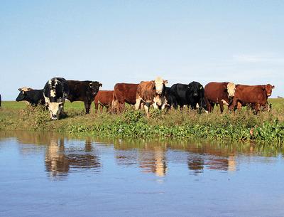 Los precios del ganado gordo en Paraguay se alinearon a los valores de Argentina