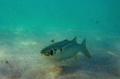 Un 31% del pescado mexicano no se corresponde con el nombre de la etiqueta