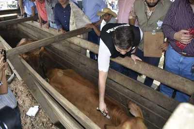 Senacsa estima inmunización de 13.700.000 cabezas de ganado