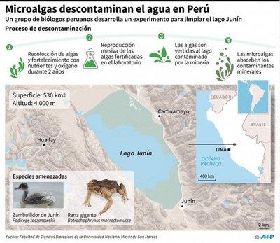 Microalgas ayudarían a descontaminar lagos de Perú