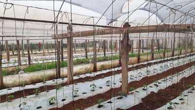 Intensas lluvias causan cuantiosas pérdidas a productores hortícolas