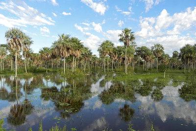 En abril se trabajará en estrategias de adaptación al cambio climático para el Chaco